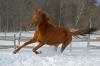 О лошадях.
